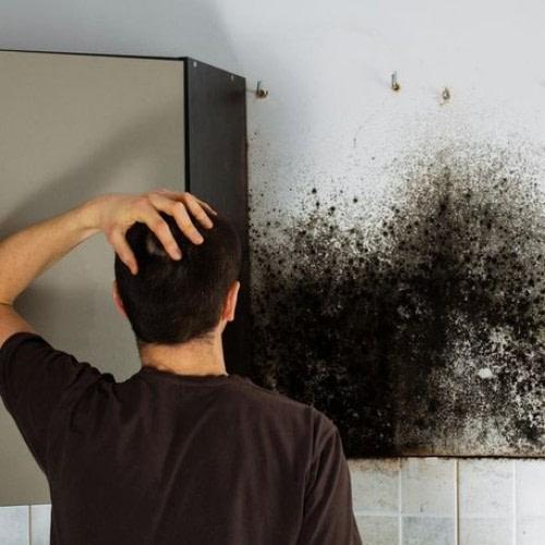 mold-health